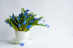 Bunch of tender squill scilla, galanthus blue flowers in a tea cup Stock Photo