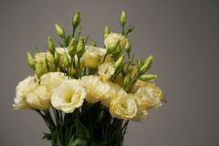 Bunch of tender yellow flowers. Bunch of tender yellow eustoma flowers royalty free stock photography