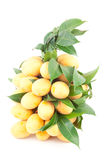 Bunch of Thai tropical fruit (Marian plum) Stock Image