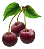 Bunch of three cherries. Illustration of a bunch of three cherries Stock Photos