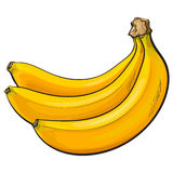 Bunch of three unopened, unpeeled ripe bananas, sketch vector illustration Royalty Free Stock Photo