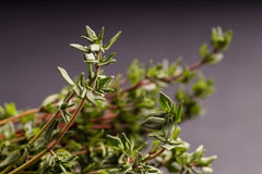 Bunch of Thyme Stock Photography