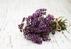 Bunch of thyme herb Royalty Free Stock Photography