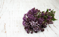 Bunch of thyme herb Stock Photos