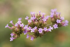 A bunch of tiny flowers, with close up of pink flowers stock photography