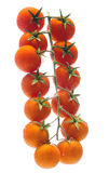 Bunch tomato. A bunch tomato in water Royalty Free Stock Images