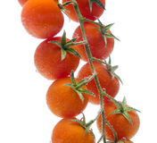 Bunch tomato. Macro bunch tomato. isolated object Royalty Free Stock Photography