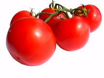 A bunch of tomato's. A bunch of fife red and ripe tomato's together on the stem on white Royalty Free Stock Image