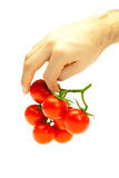 Bunch of tomato in your hand man isolated on white Stock Photos