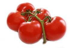 Bunch of tomatoes. Bunch of five tomatoes isolated on white Stock Images