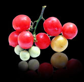 Bunch of tomatoes on black backgroundon Stock Photos