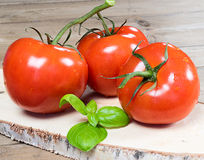 Bunch of tomatoes Royalty Free Stock Image