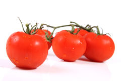 Bunch of tomatoes with droplets Stock Image