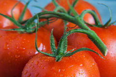 Bunch of tomatoes with drops close-up Stock Photo