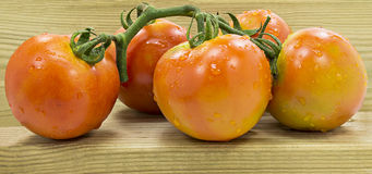 Bunch of tomatoes  on white Stock Photography
