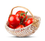 Bunch of tomatoes in wood white basket Royalty Free Stock Photos