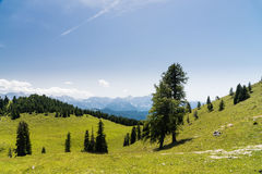 Bunch of trees in summer mountains Royalty Free Stock Images