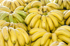 A Bunch of Tropical Malaysia Bananas Royalty Free Stock Image
