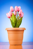 Bunch of tulip flowers Royalty Free Stock Photo