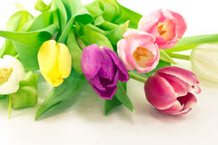 Bunch of tulip flowers Royalty Free Stock Images