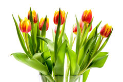 Bunch of tulip flowers Stock Photos