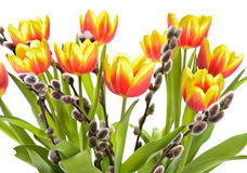 Bunch of tulip flowers Royalty Free Stock Photos