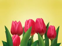 Bunch of tulip flowers on the table. Stock Photo
