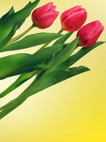 Bunch of tulip flowers on the table. EPS 8 Royalty Free Stock Photos