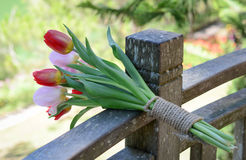Bunch of tulip flowers. On the wooden bench at the sunny day Royalty Free Stock Photo