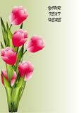 Bunch of tulip Stock Photo