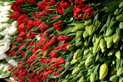 Bunch Of Tulips 01 Royalty Free Stock Photo