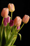 Bunch of tulips 1 Royalty Free Stock Photo