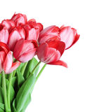 Bunch of Tulips Stock Images
