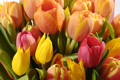 The bunch of tulips Stock Images