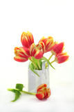 Bunch of tulips Royalty Free Stock Photography