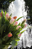 Bunch of tulips. On the fountain background Royalty Free Stock Photos