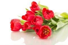 Bunch of tulips stock photography
