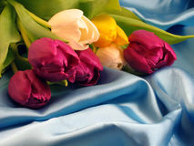 Bunch of tulips. A bunch of colored tulips on a blue silk background stock images