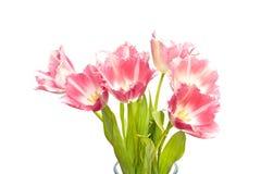 Bunch of tulips Stock Image