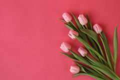 Bunch of spring tulips in bloom royalty free stock images