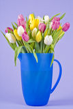 Bunch of Tulips in a Blue Plastic Jug Stock Image