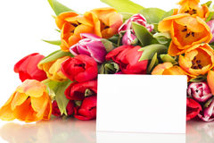 Bunch of tulips with card Royalty Free Stock Photos