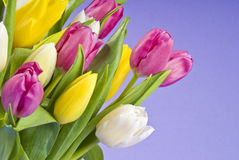 Bunch of Tulips Closeup Royalty Free Stock Photography