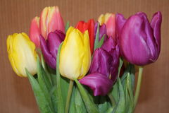 A bunch of tulips. Tulips different colours purple yellow pink and red Royalty Free Stock Photography