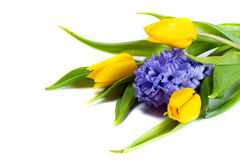 Bunch of tulips and hyacinths Stock Image