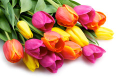 Bunch of tulips isolated on white Royalty Free Stock Images