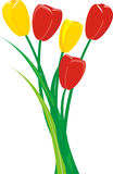 Bunch of tulips Stock Photos