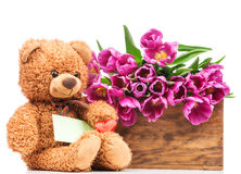 Bunch of tulips and a teddy bear Royalty Free Stock Photo