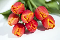 Bunch of Tulips (Tulipa), close-up Royalty Free Stock Image