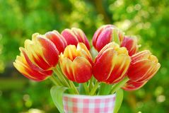 Bunch of tulips in the vase. Bunch of red-yellow tulips in the vase on green tree background Royalty Free Stock Image